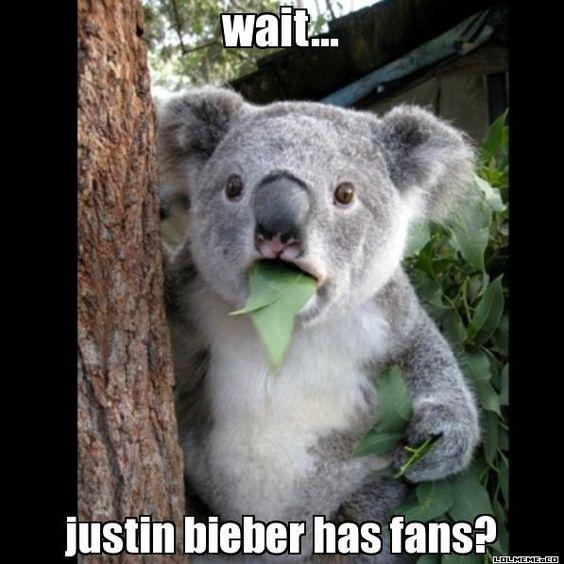 wait... justin bieber has fans? - Koala Cant Believe It | LOL Meme Generator
