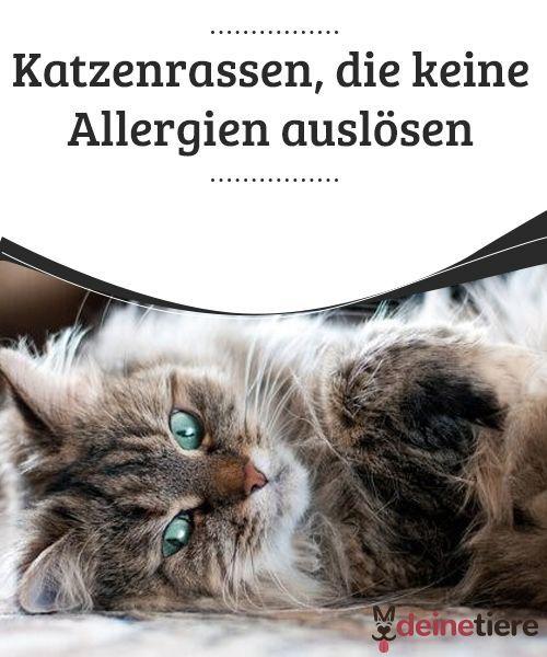 Allergien Es Gibt Katzenrassen Die Keine Allergien Auslosen Katzen Rassen Katzenrassen Katzen