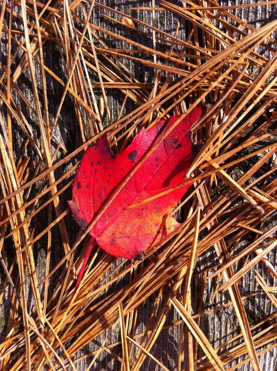 Autumn photos!