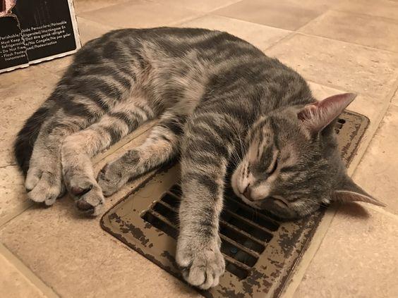 Warmest spot in the house http://ift.tt/2h7qGhZ