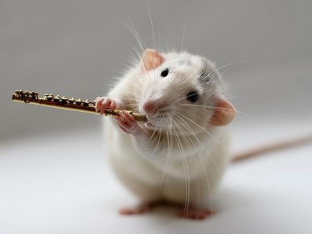 I plays meh flute now.