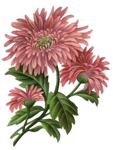 Flores en varios colores - Angel-o-Demonio --- - Picasa Web Albums: