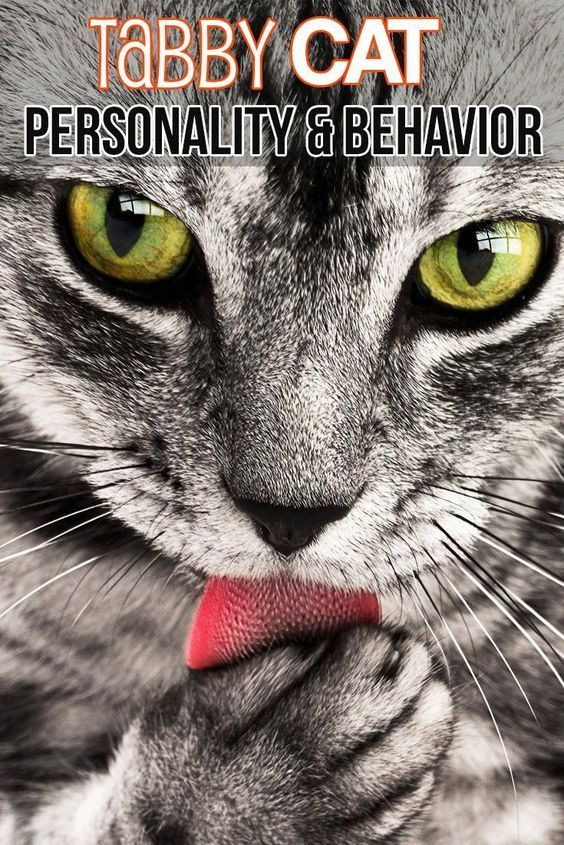 Felineliving Net Cat Personalities Tabby Cat Orange Tabby Cats