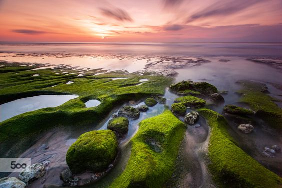 Dusk Sunset over Green Moss by Febry Hadinata on 500px