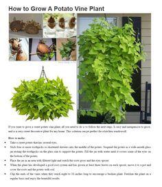 Pflanzen balkonkasten