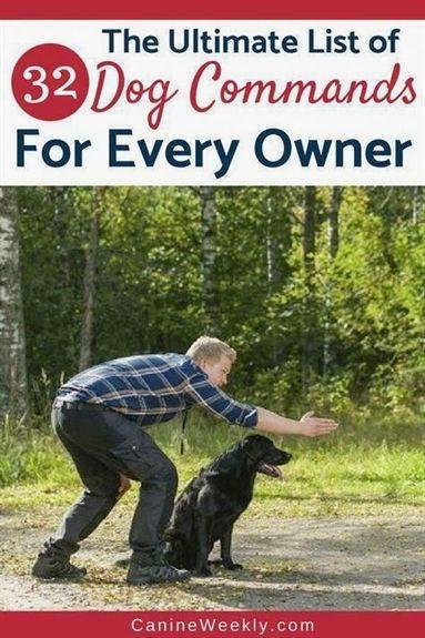 Dog Training Choke Collar Dog Training Mata Dog Training