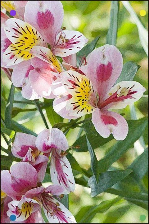 Clarkia Garden Flower Beds Beautiful Flowers Garden Beautiful Flowers
