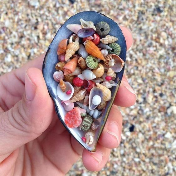 The cutest tiniest most perfect little shells ever - so colorful too!