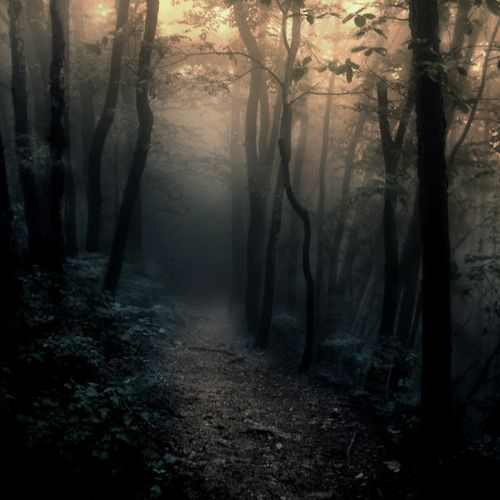 Foggy woods. No, not where I want to live, but where I live will have this as a backdrop.