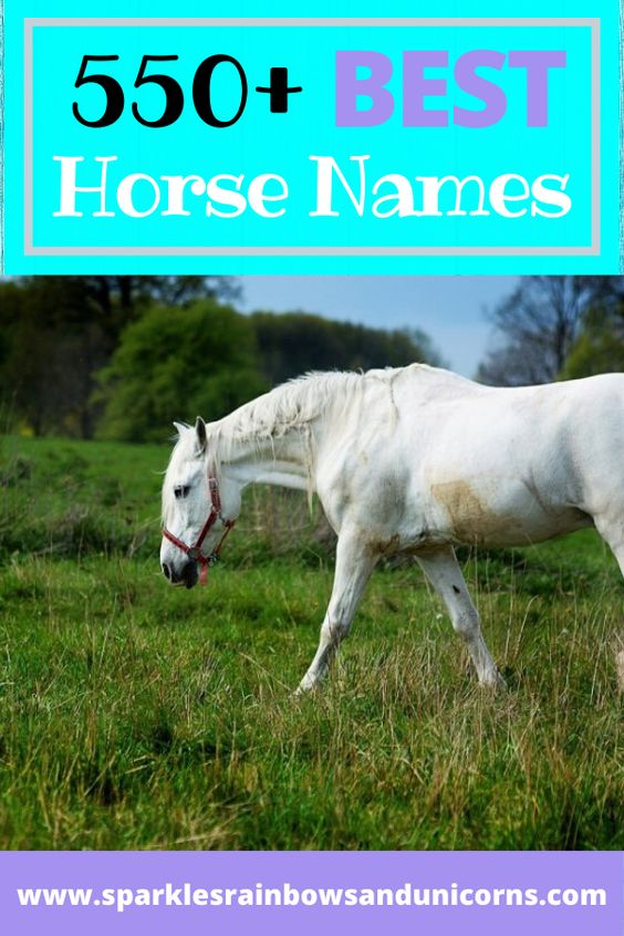 The best horse names list on the internet. Why? Not because the list is  the longest on the internet, but because these are categorized  handpicked favorites that will help you find the perfect name for your  new furry friend.