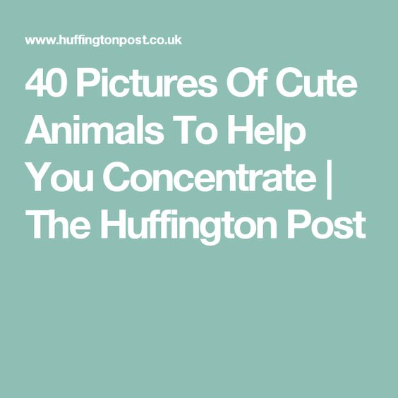 40 Pictures Of Cute Animals To Help You Concentrate | The Huffington Post