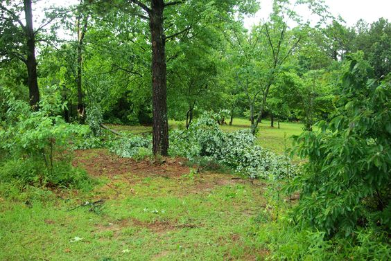summer of 2009, just after storms that  blew down trees and limbs along with disruption of electrical power