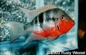 Mouths Cichlids And Names On Pinterest