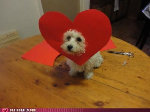 Maltese Valentine