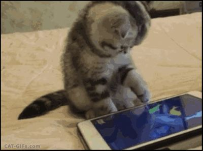 CAT GIF • Innocent Kitty trying to catch and... EAT a fish on an IPad Cat fishing game