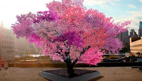 Você não vai acreditar, mas esta árvore que produz 40 tipos de frutos diferentes