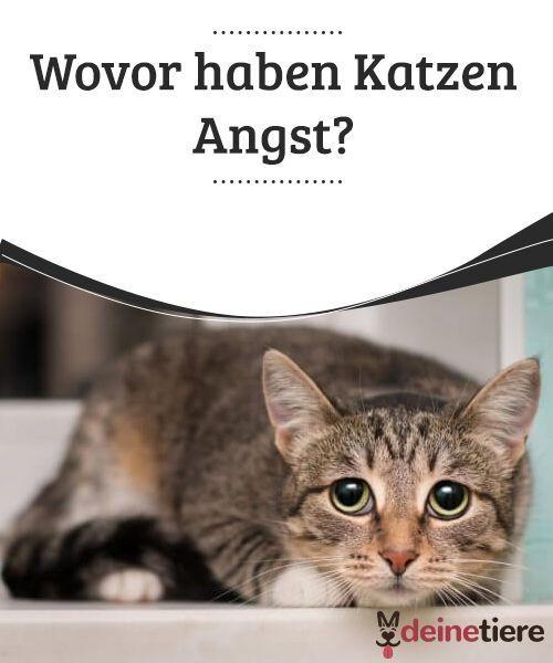 Wovor Haben Katzen Angst Deine Tiere Katzen Katzen Katzen Verhalten Witzige Katzenfotos