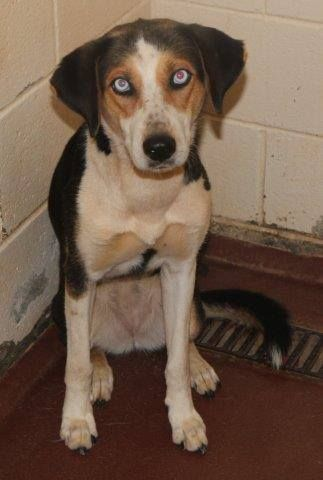 Henry Co., GA High Kill Shelter - Desperately Needs to Get some Animals Adopted/Fostered/Rescued - Please Consider Fostering just 1