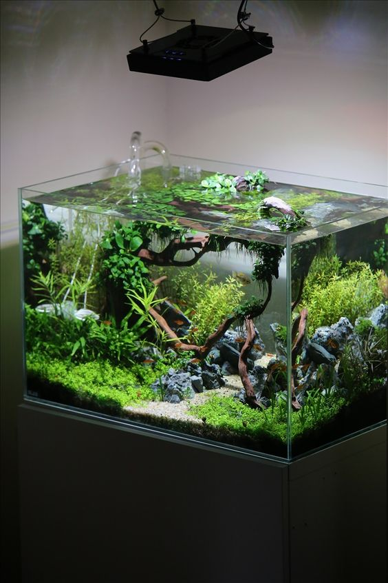 Planted tank coisia vallem by lauris karpovs aquascape awards pin by aqua poolkoh - Design aquasacpe ...