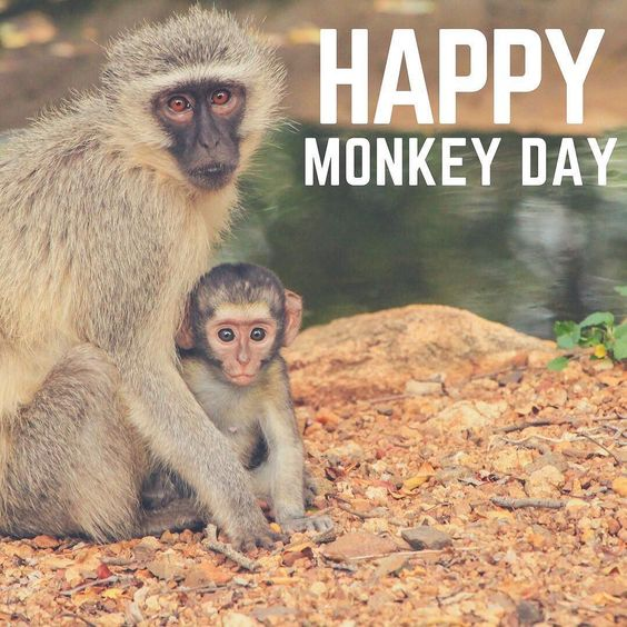 Happy #MonkeyDay! Monkey Day is an unofficial holiday celebrated  internationally on December 14. There are currently 264 known monkey  species. Whil…