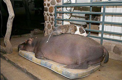 I think she needs a queen size mattress