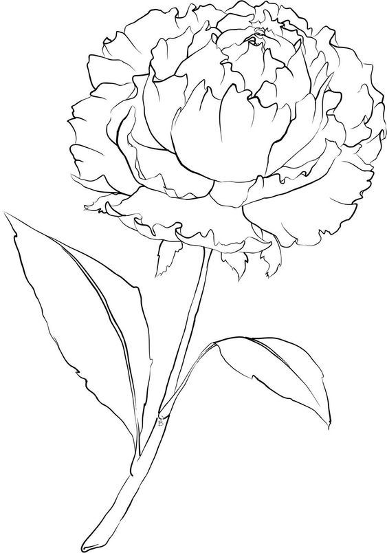 Beccy's Place: Peony Flower Template/Stencil/ Coloring page.