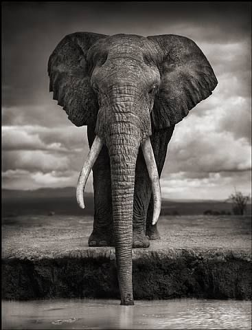 "by Nick Brandt - an image from one of my fave photo books ""A Shadow Falls"":"