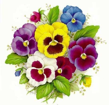 pansies and smile on pinterest purple pansy clip art pansy clip art border