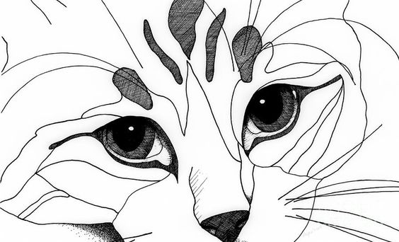 Line Drawing Of A Cat Face : Cat eyes face drawings and on pinterest