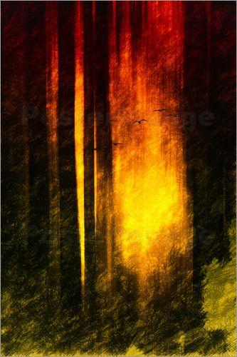 Stille des Waldes Bilder: Poster von Dagmar Marina bei Posterlounge.de