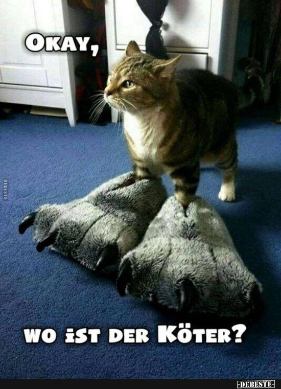 Okay Wo Ist Der Koter Mit Bildern Katze Lustig Spruche