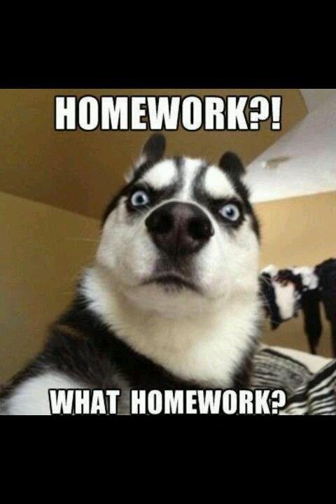 Homework. Sucks. | Stu... Work Sucks Quotes