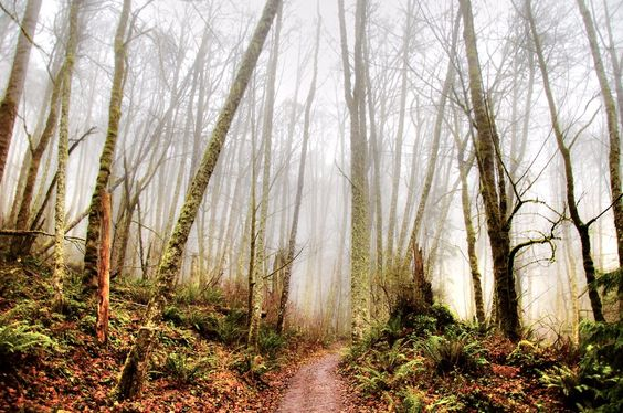 Tiger Mountain, Washington