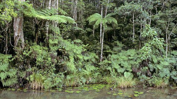 Dichter Regenwald, davor ein Fluss. | Bildquelle: imago