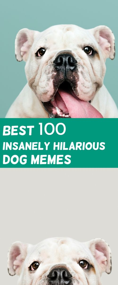 Dog Memes And Funny Humor Pictures Hilarious Jokes Relationship Dog Memes Funny Dog Memes Dog Memes Clean