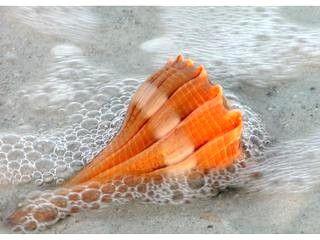 .shell orange
