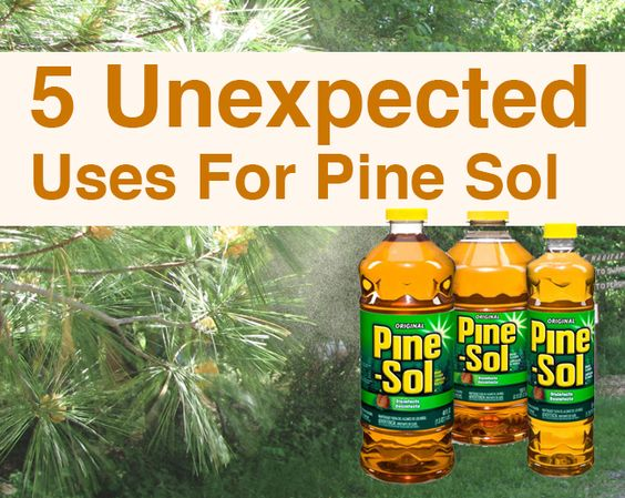 Unexpected Uses of Pine-Sol: Fly Spray, Wasp Killer, Keep Pests Away,Pet Pee Deterrent,Stain Remover
