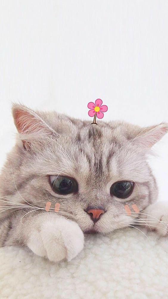 B R U N A M A R R E I R O S Abrunamarreiros Conteudos Do Instagram Kucing Cantik Gambar Anjing Lucu Kucing Dan Anak Kucing Cat wallpaper images wallpaper