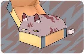 comportamento del gatto