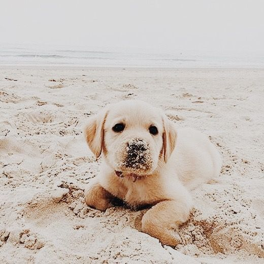 Sandy Lil Pup Cute Animals Cute Animal Pictures Dog Lovers