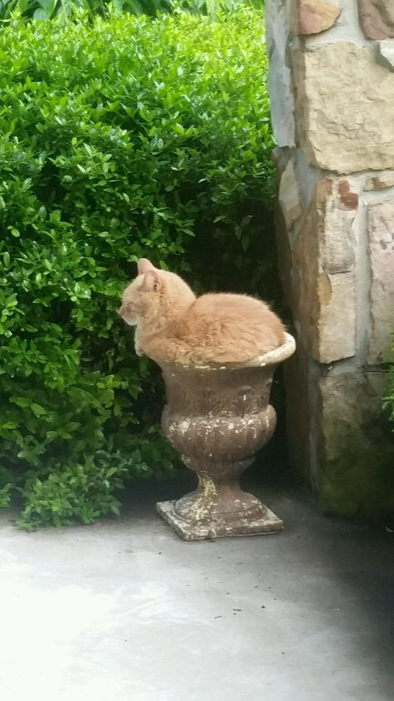My cat thinks he is a potted plant.