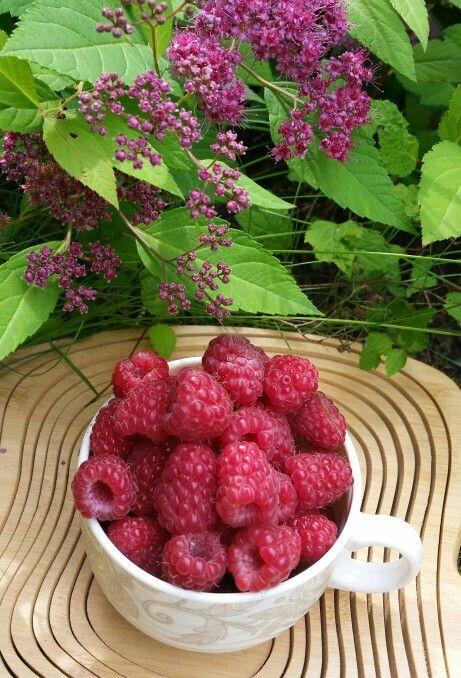 Raspberries in my garden.