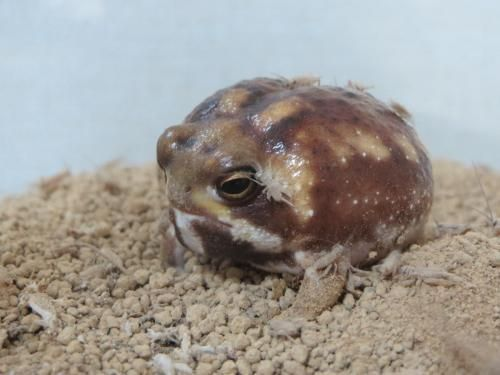 Frog Discover 溺れるカエル 粘着系のカエル Cute Frogs Cute Animals Funny Frogs