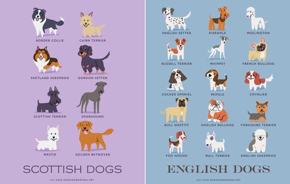 As raças de cachorros vem de todos os lugares do mundo. Explicamos de onde vem cada raça em nosso guia de raças de cães, que você pode ver aqui.  O site 9Gag fez esse infográfico fofo com as raças e suas regiões de origem. Encontre o seu!