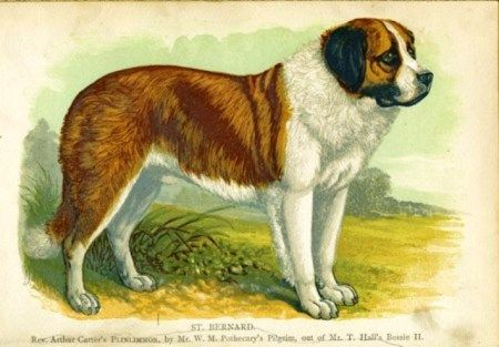 In 1908, Plinlimmon the champion St. Bernard was a big star on Broadway in New York.