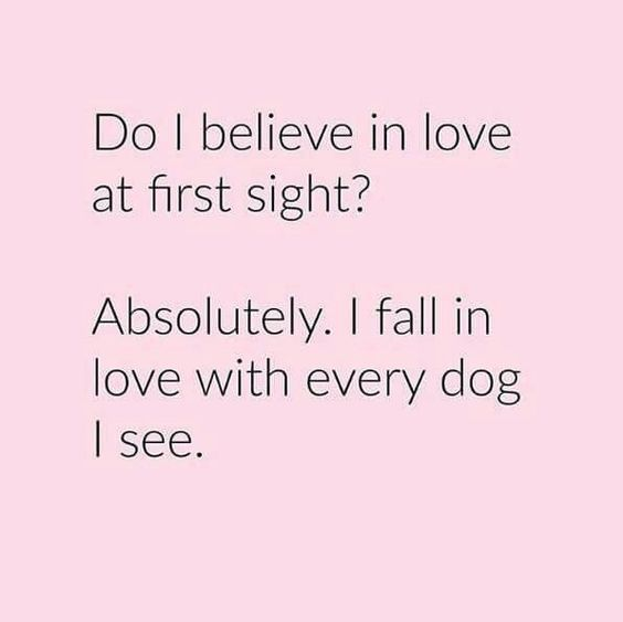 love at first sight dog quote - Google Search Dog Quotes Pinterest ...