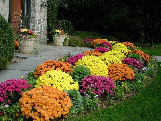 chrysanthemen garten ideen gartenpflanzen herbstpflanzen gartenweg, Garten Ideen