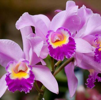 Flowers+ - Comunidade - Google+