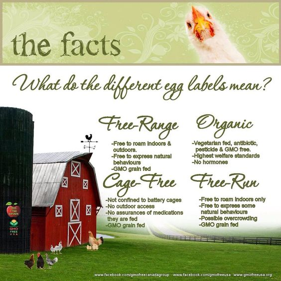 Difference in eggs. Good to know I never knew the difference in cage free and free range. I will stick with the Organic non GMO.