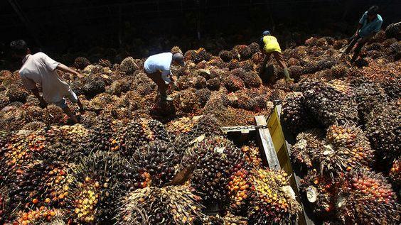 Homens transportam carregamento de fruto da palma em usina de processamento em Lebak, na Indonésia